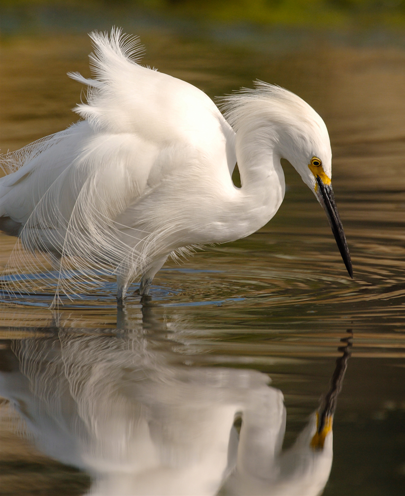 Michael Caroff Wildlife Photography